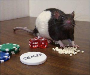 gambling-rat-979656